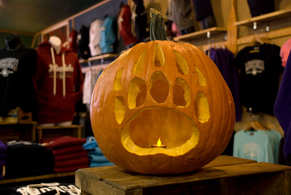 Muskoka Bear Wear Pumpkin [video]