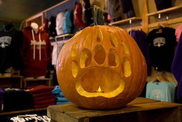 Muskoka Bear Wear Pumpkin [video]