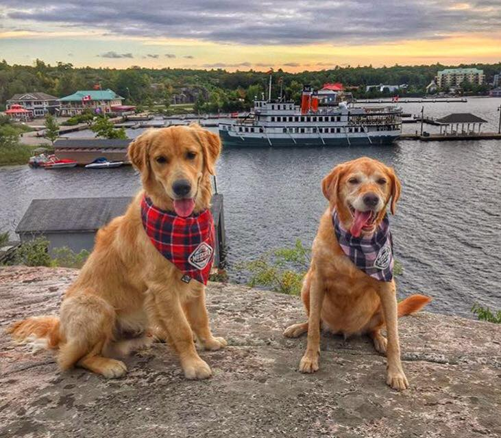 Muskoka Dogs, Part of our Muskoka Family!