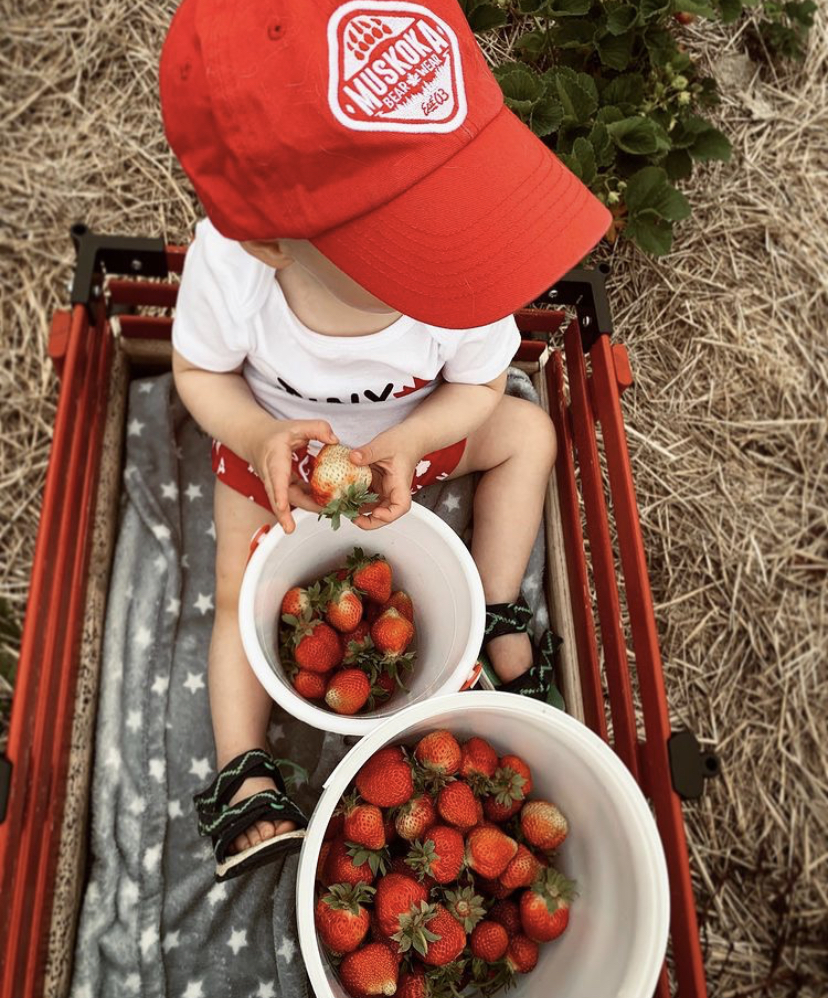 Toddler sitting in a wagon with two bowls of strawberries wearing a red Muskoka Bear Wear cap
